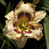 Hemerocallis Lady Betty Fretz