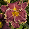 Hemerocallis Out of This World
